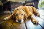 Giardia en perros: 7 cosas que debe saber