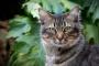 Gatos callejeros y salvajes: cómo detectar la diferencia