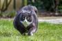 Infección bacteriana (Leptospirosis) en gatos