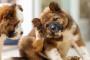 5 problemas comunes de la piel del perro.
