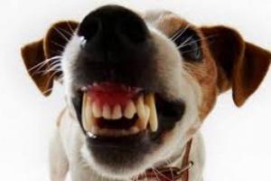 Enfermedad de las encías de perro