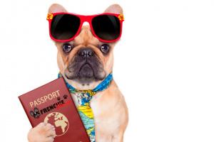 Llevando a su perro de vacaciones con usted