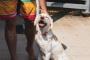 Las pequeñas cosas que hacemos para crear un hogar cómodo para nuestros perros
