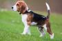 Los investigadores confirman que los perros les gusta trabajar para sus delicias