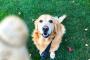 Herramientas esenciales para la formación de perros mayores.
