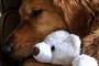 Regalos de Pascua alternativos para mascotas