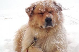 Cómo preparar a su mascota para el clima frío