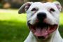 ¿Por qué los perros tienen lenguas manchadas?