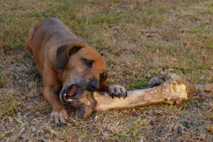 Cómo mantener estimuladas a las mascotas Senior