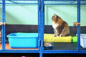 Preguntas a considerar antes de adoptar un gato
