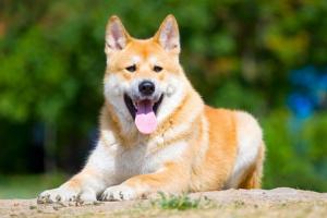 Trastorno nervioso / muscular en perros
