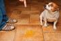 Cómo quitar la orina del perro de la madera