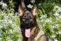 Cáncer de piel de verano y sus peligros para mascotas