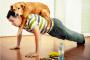 ¿Qué tanto ejercicio necesitan nuestros perros?