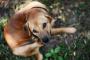 ¿Piensas que tu perro tiene sarna? Sepa qué es qué deshacerse de la picazón