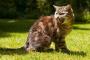 Agresión en gatos