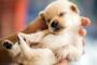 Cómo saber si un cachorro es un niño o una niña