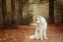 Enfermedad Inflamatoria de la Piel en Perros