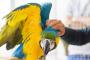Cómo enseñarle a su ave a saludar