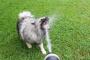 Polidipsia (aumento de la sed) en perros: síntomas, causas y tratamientos.