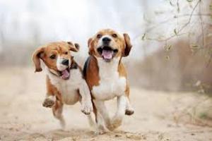 Agujero en la tráquea en perros