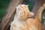 Enfermedad de Lyme en gatos