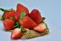 ¿Puede mi perro comer fresas?