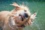 5 maneras de tratar la caspa de perro