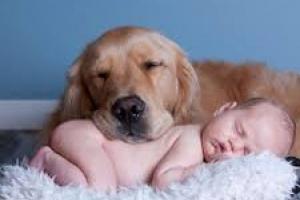 Cómo ayudar a su perro a adaptarse cuando traiga a su bebé a casa