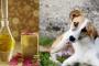 Aceite de Neem para perros: ¿Qué es y qué hace?