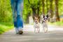 Cómo una caminata diaria mejorará la salud y el comportamiento de su perro