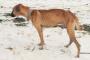 Hipertiroidismo en perros: síntomas, causas y tratamientos.