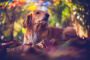 Siete maneras de ayudar a los perros y gatos a enfrentar el estrés de los fuegos artificiales