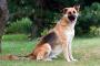 Nutrigenómica para animales: cómo puede ayudar a su mascota