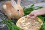 Pérdida de apetito en conejos