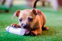 6 consejos para evitar que un cachorro mastique