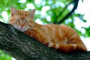 Enfermedades de la piel en la nariz del gato
