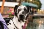 Trastornos de la articulación temporomandibular en perros