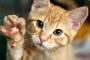 Los gatos también tienen gusano del corazón