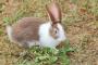 Inflamación del oído medio e interno en conejos