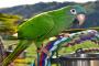 Ácaros de plumas parasitarias en pájaros