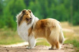 Reducción del párpado inferior en los perros