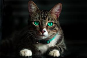 7 consejos simples de limpieza de la casa para padres de gatos