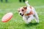 Hábitos diarios que ayudan a mantener a tu perro en forma