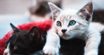 Diabetes en perros y gatos: todo lo que necesita saber