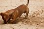 Cómo detener a tu perro de excavar