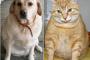 7 causas comunes de aumento de peso en perros y gatos