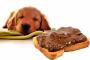 Toxicidad del chocolate - Hablemos de perros y chocolate