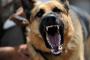 Sobreprotector: cuando los perros se cuidan demasiado