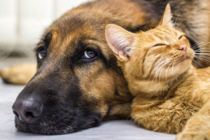 Convulsiones y epilepsia en perros